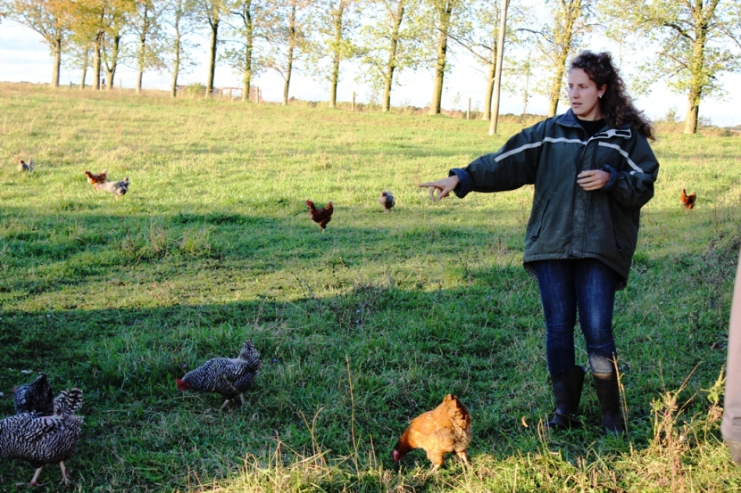 mel with chickens